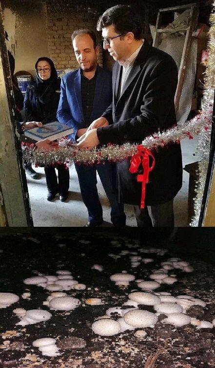 بهار|  افتتاح کارگاه مددجویی تولید قارچ