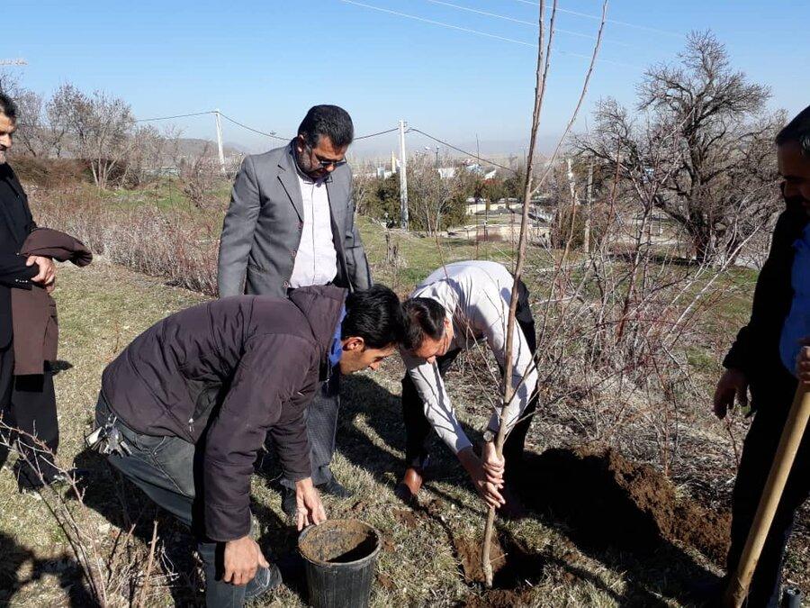 گزارش تصویری| غرس یک اصله نهال در مجتمع فرهنگی آموزشی ابن سینا