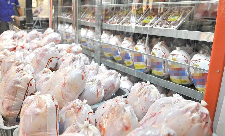 رییس بهزیستی کاشان: مرغ تاریخ گذشته بین مددجویان توزیع نشد