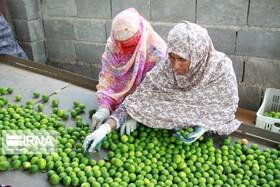اجرای برنامه سازمان بهزیستی برای آمادهسازی شغلی زنان سرپرست خانوار